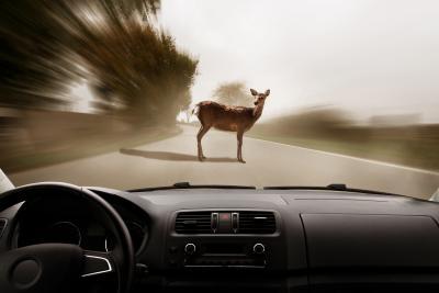 3er BMW potentiell in Wildunfall verwickelt, aber mit Autoversicherung